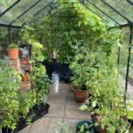 Växthus fortsättning